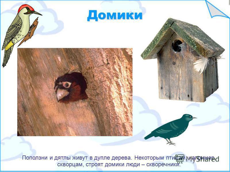 Гнезда Многие птицы живут на деревьях и строят гнезда там же. Гнезда нужны птицам, чтобы откладывать яйца, из которых потом появляются птенцы.