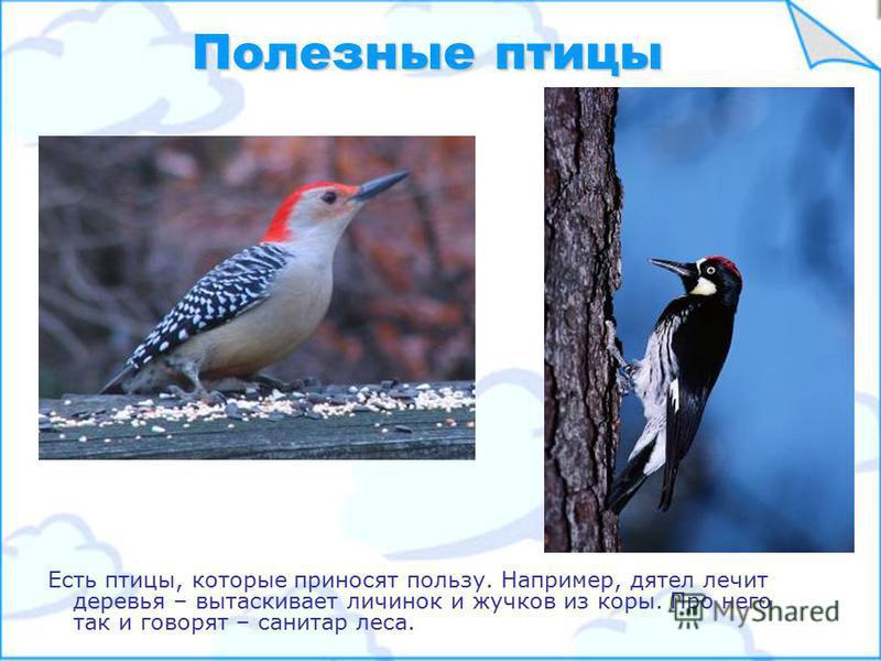 Самой красивой птицей считается павлин, посмотрите какой у него хвост! Павлин