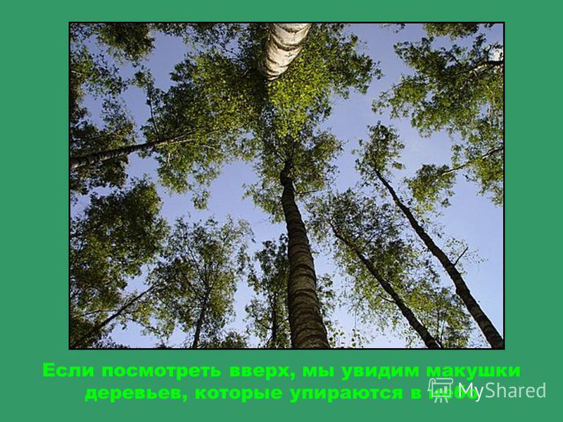 Ветка с листьями после дождя