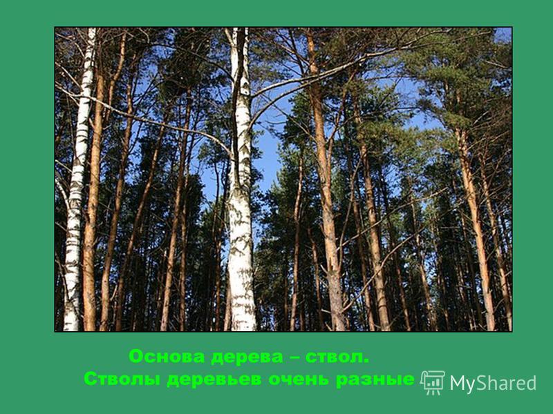 Если посмотреть вверх, мы увидим макушки деревьев, которые упираются в небо