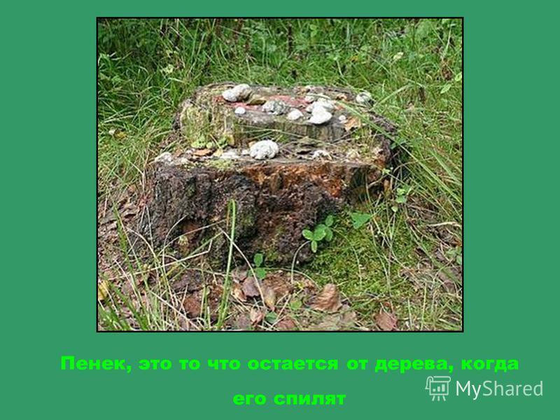 Подножие деревьев устилает мох, если его слегка потрогать ладонью, он мягкий, как ковер