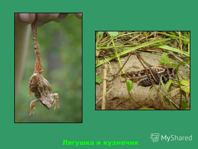 Маленькие жители леса - шмель, гусеница