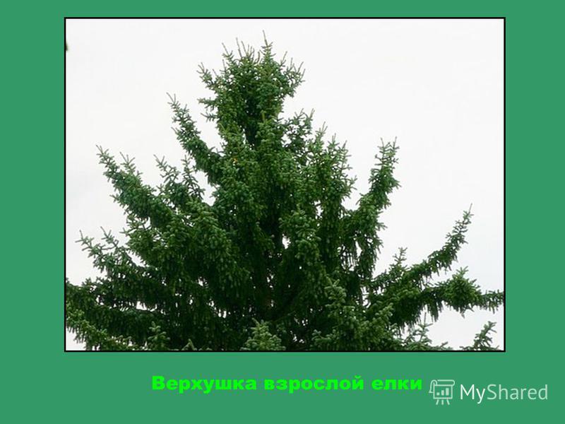 Кругом мох, потому что земля здесь очень влажная