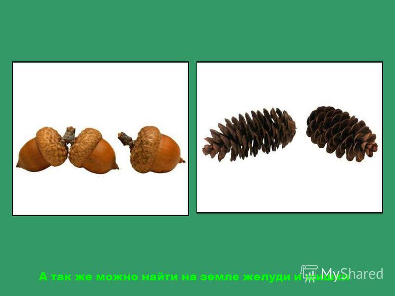 Осенью в лесу можно собирать грибы