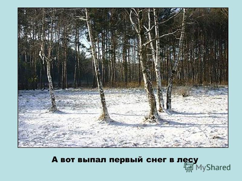 Давай не оставлять мусор в лесу? Пусть наш лес будет чистым!!!