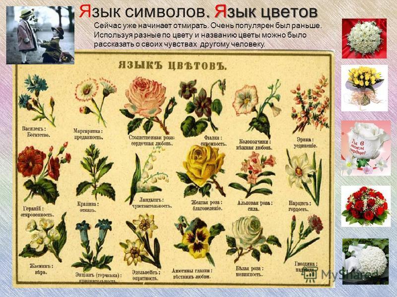 . Язык цветов Язык символов. Язык цветов Сейчас уже начинает отмирать. Очень популярен был раньше. Используя разные по цвету и названию цветы можно было рассказать о своих чувствах другому человеку.