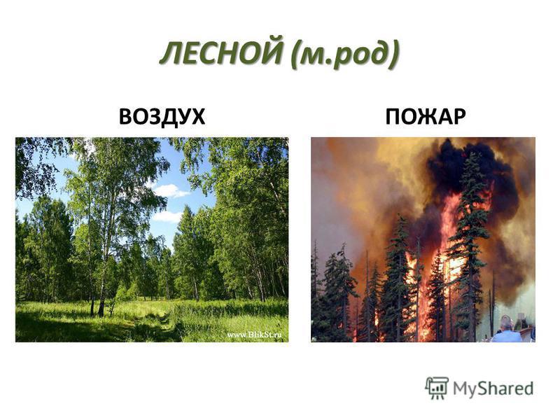 ЛЕСНОЙ (м.род) ВОЗДУХ ПОЖАР пожар