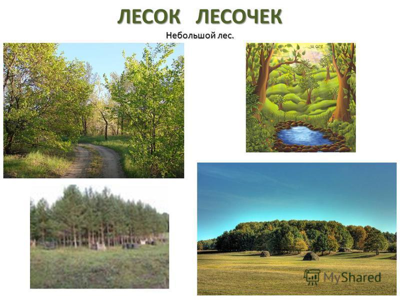 ЛЕСОК ЛЕСОЧЕК Небольшой лес.
