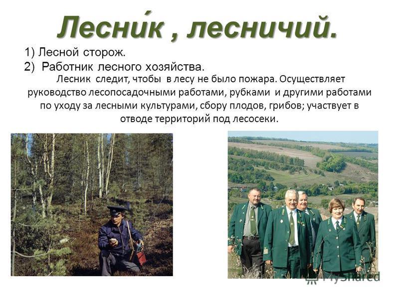 Лесни́к, лесничий. Лесни́к, лесничий. 1) Лесной сторож. 2) Работник лесного хозяйства. Лесник следит, чтобы в лесу не было пожара. Осуществляет руководство лесопосадочными работами, рубками и другими работами по уходу за лесными культурами, сбору пло