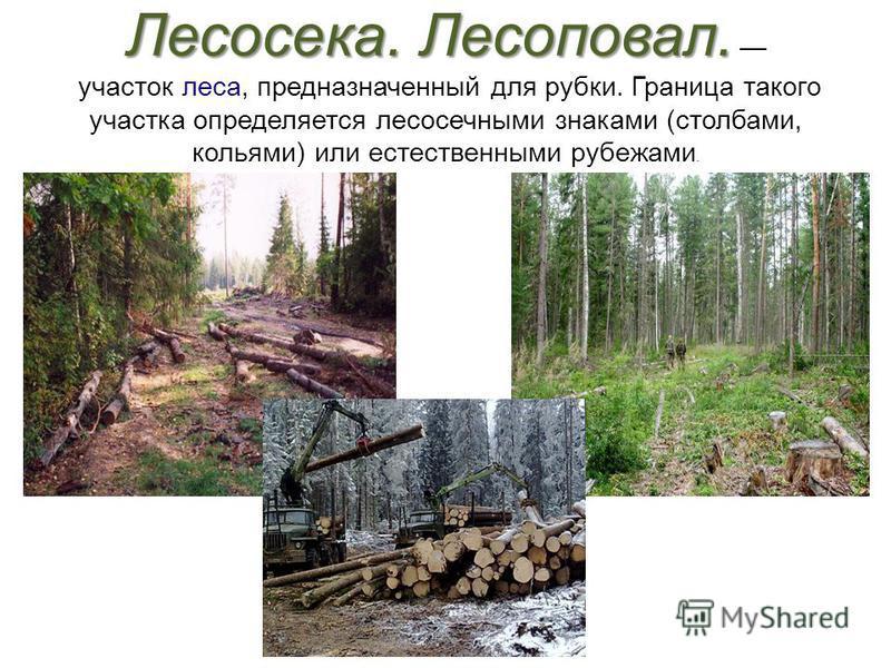 Лесосека. Лесоповал. Лесосека. Лесоповал. участок леса, предназначенный для рубки. Граница такого участка определяется лесосечными знаками (столбами, кольями) или естественными рубежами.
