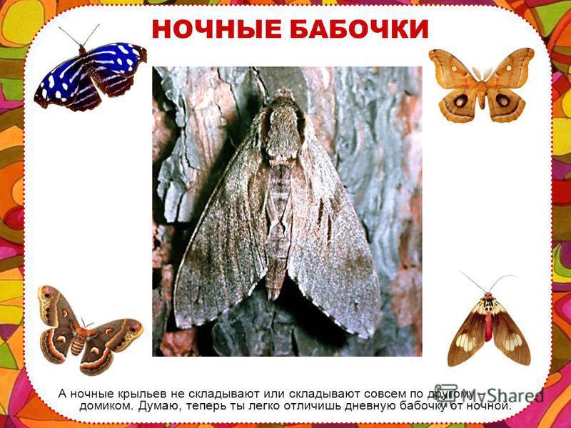 ДНЕВНЫЕ БАБОЧКИ Если ты заметил бабочку, которая села на ветку или на цветок и сложила крылышки вместе, то значит это дневная бабочка. Она сейчас спит, отдыхает.