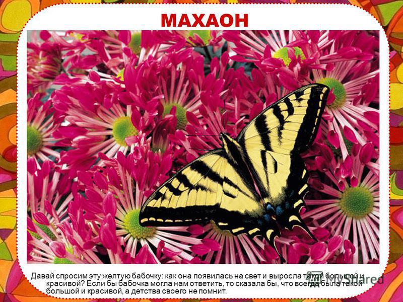 КРЫЛЬЯ Крылья бабочек состоят из сотни маленьких чешуек, которые отражают солнечный свет, поэтому крылья переливаются разными яркими красками.