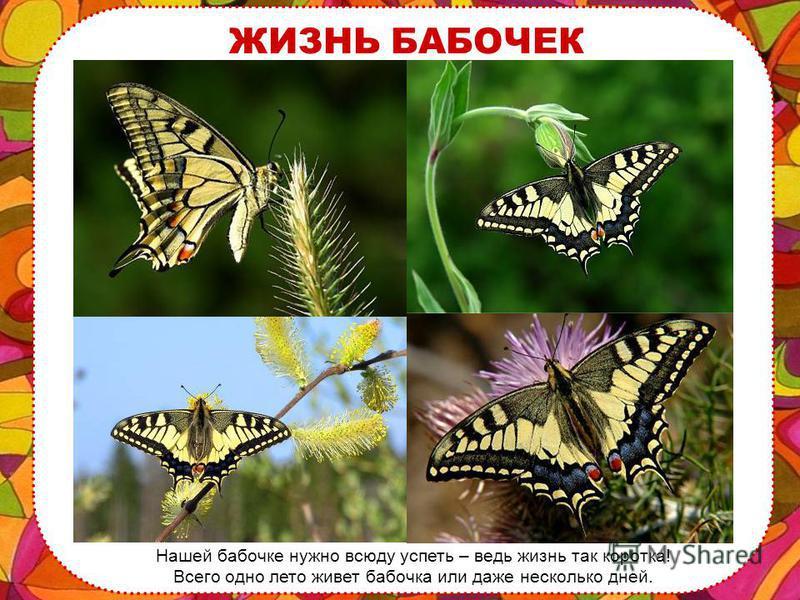 БАБОЧКА … бабочка! Словно после долгого-долгого сна она расправляет свои тонкие крылышки и летит навстречу цветам, деревьям, солнцу.