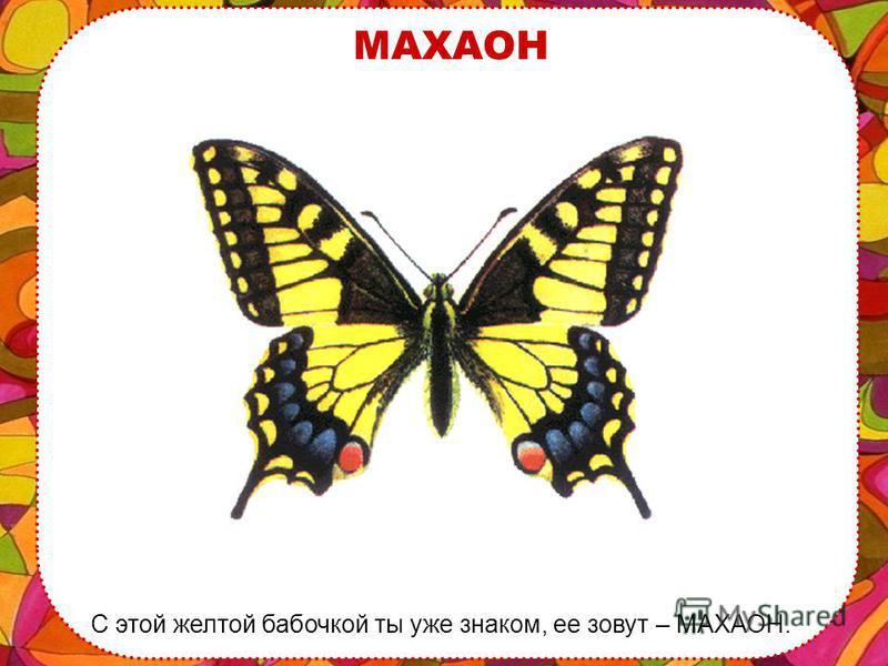 ИМЕНА БАБОЧЕК Таким красивым созданиям дают необычные и очень красивые имена. Я тебе расскажу о самых известных бабочках.