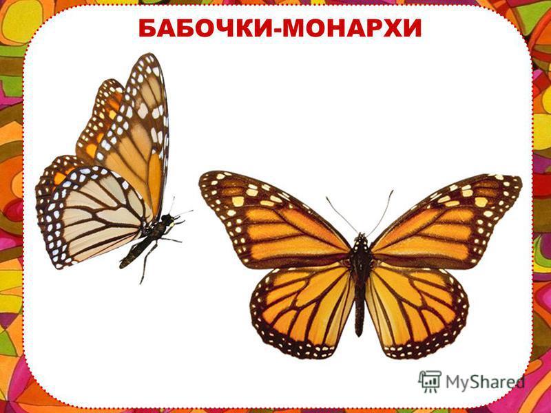 МАХАОН С этой желтой бабочкой ты уже знаком, ее зовут – МАХАОН.
