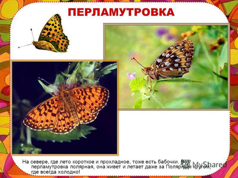 Бабочки любят тепло и цветы, поэтому больше всего бабочек живет на юге, в тропических жарких странах.