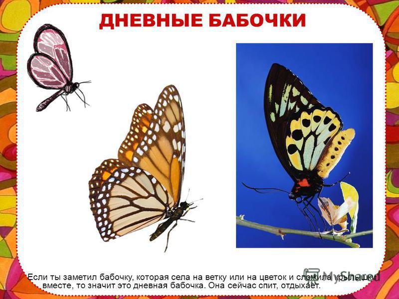 ДНЕВНЫЕ и НОЧНЫЕ БАБОЧКИ Есть бабочки дневные и ночные. Дневные бабочки ярко окрашены, а ночные обычно серые, рыжие, имеют не такой нарядный окрас.