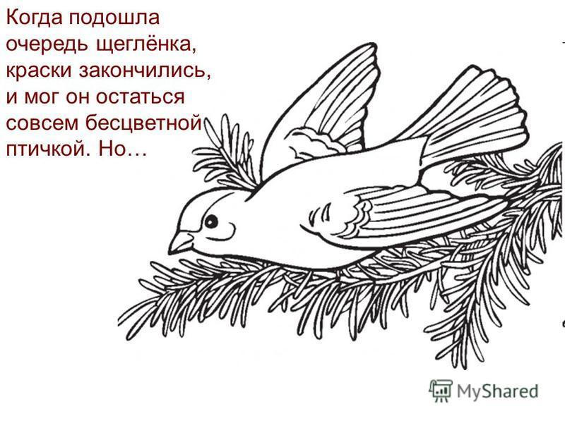 Когда подошла очередь щеглёнка, краски закончились, и мог он остаться совсем бесцветной птичкой. Но…