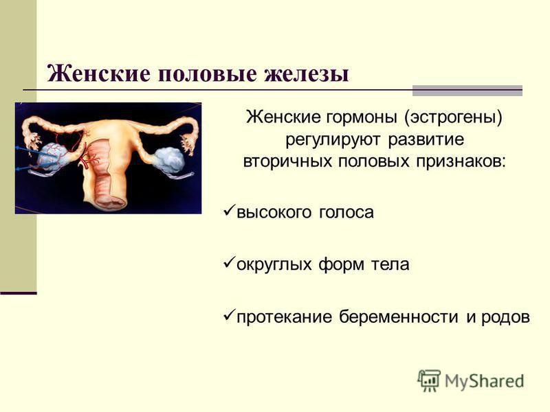 Женские половые железы Женские гормоны (эстрогены) регулируют развитие вторичных половых признаков: высокого голоса округлых форм тела протекание беременности и родов