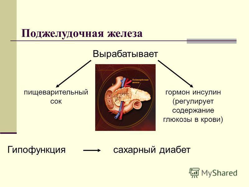 Поджелудочная железа Вырабатывает пищеварительный сок гормон инсулин (регулирует содержание глюкозы в крови) Гипофункциясахарный диабет