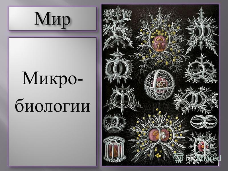 Мир Мир Микро- биологии Микро- биологии