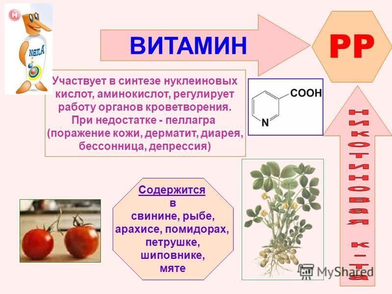 ВИТАМИН PP Участвует в синтезе нуклеиновых кислот, аминокислот, регулирует работу органов кроветворения. При недостатке - пеллагра (поражение кожи, дерматит, диарея, бессонница, депрессия) Содержится в свинине, рыбе, арахисе, помидорах, петрушке, шип