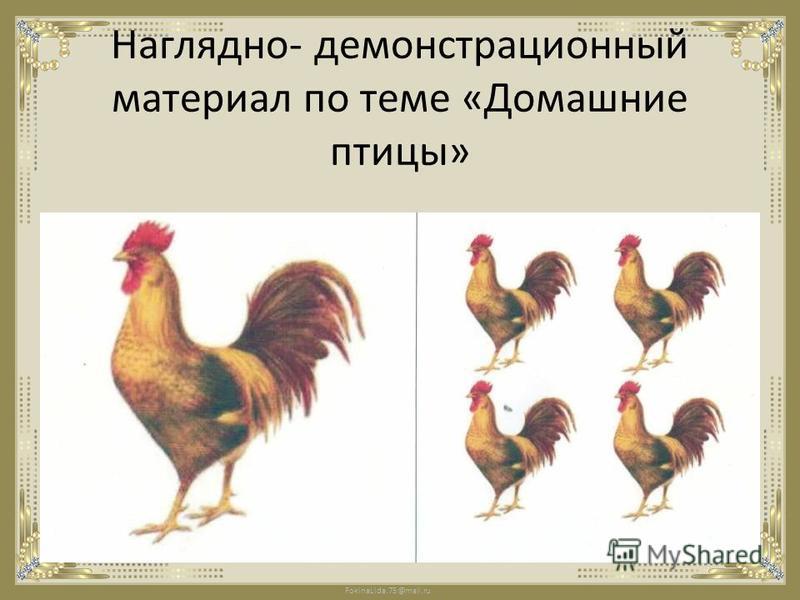 FokinaLida.75@mail.ru Наглядно- демонстрационный материал по теме «Домашние птицы»