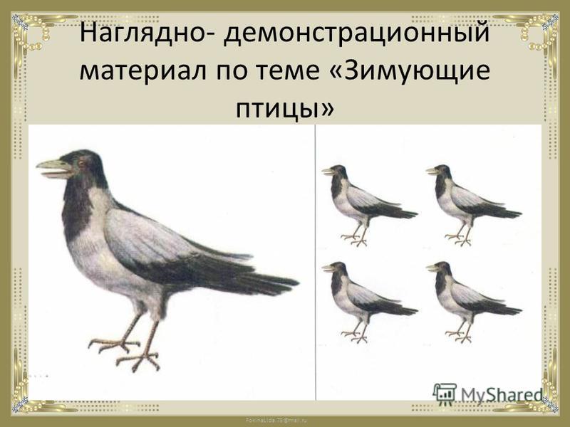 FokinaLida.75@mail.ru Наглядно- демонстрационный материал по теме «Зимующие птицы»