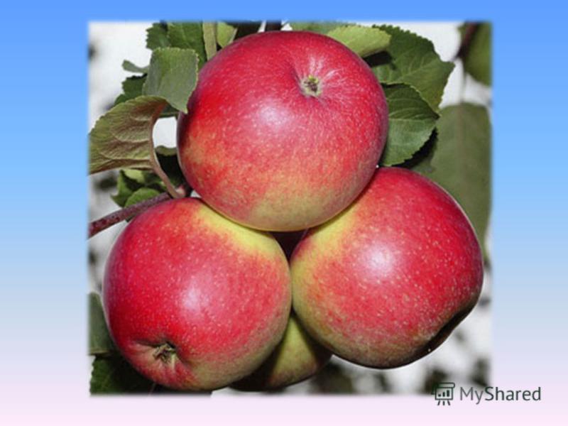Яблоки, дающие молодость.