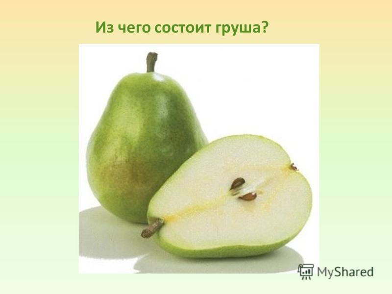 Из чего состоит груша?