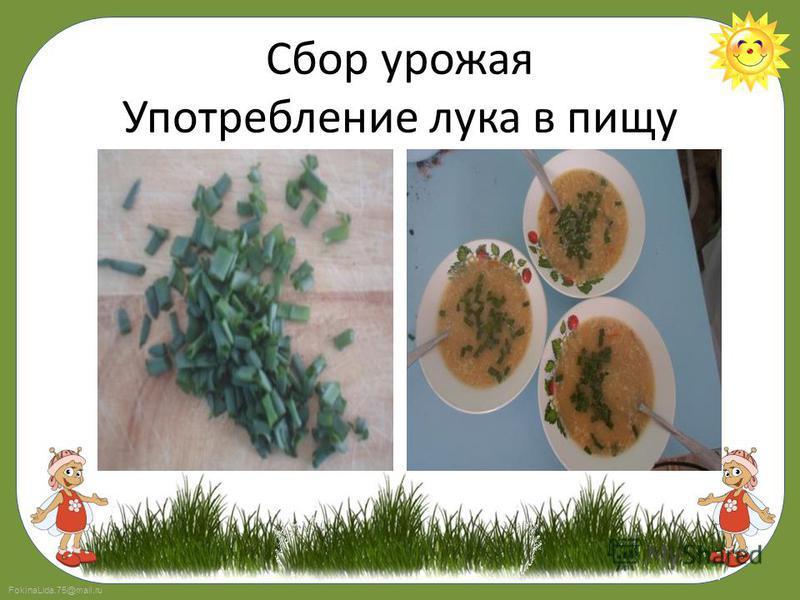 FokinaLida.75@mail.ru Сбор урожая Употребление лука в пищу