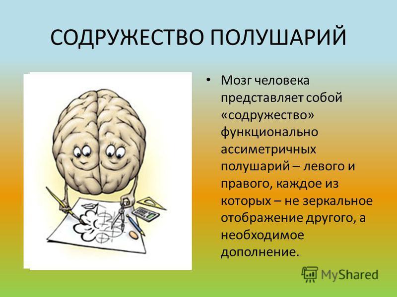 СОДРУЖЕСТВО ПОЛУШАРИЙ Мозг человека представляет собой «содружество» функционально ассиметричных полушарий – левого и правого, каждое из которых – не зеркальное отображение другого, а необходимое дополнение.