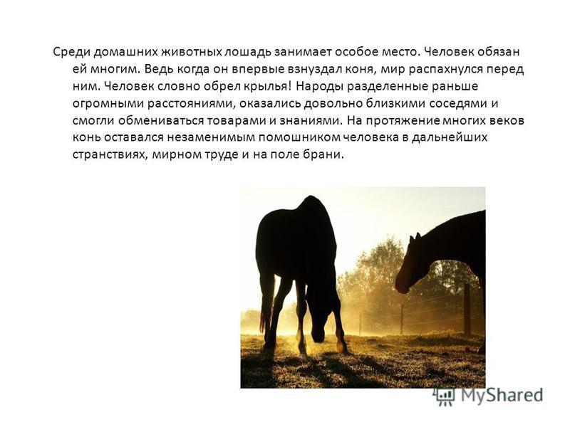 Среди домашних животных лошадь занимает особое место. Человек обязан ей многим. Ведь когда он впервые взнуздал коня, мир распахнулся перед ним. Человек словно обрел крылья! Народы разделенные раньше огромными расстояниями, оказались довольно близкими