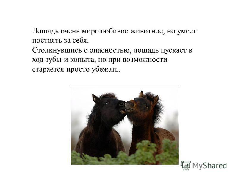 Лошадь очень миролюбивое животное, но умеет постоять за себя. Столкнувшись с опасностью, лошадь пускает в ход зубы и копыта, но при возможности старается просто убежать.