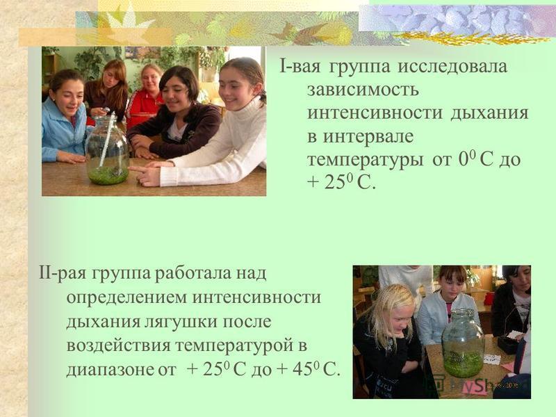 I-вася группа исследовала зависимость интенсивности дыхания в интервале температуры от 0 0 С до + 25 0 С. II-рая группа работала над определением интенсивности дыхания лягушки после воздействия температурой в диапазоне от + 25 0 С до + 45 0 С.