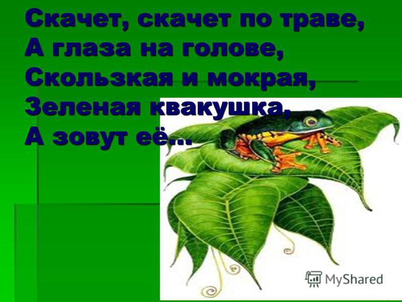 Скачет, скачет по траве, А глаза на голове, Скользкая и мокрая, Зеленая квакушка, А зовут её…