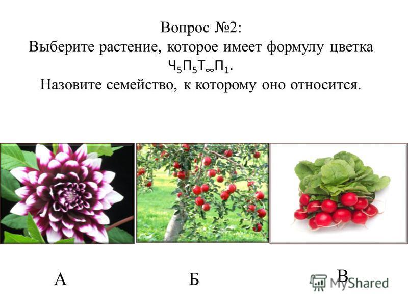 АБ В Вопрос 2: Выберите растение, которое имеет формулу цветка Ч 5 П 5 Т П 1. Назовите семейство, к которому оно относится.