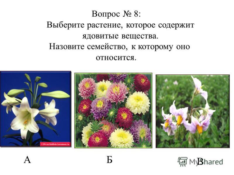 АБ В Вопрос 8: Выберите растение, которое содержит ядовитые вещества. Назовите семейство, к которому оно относится.