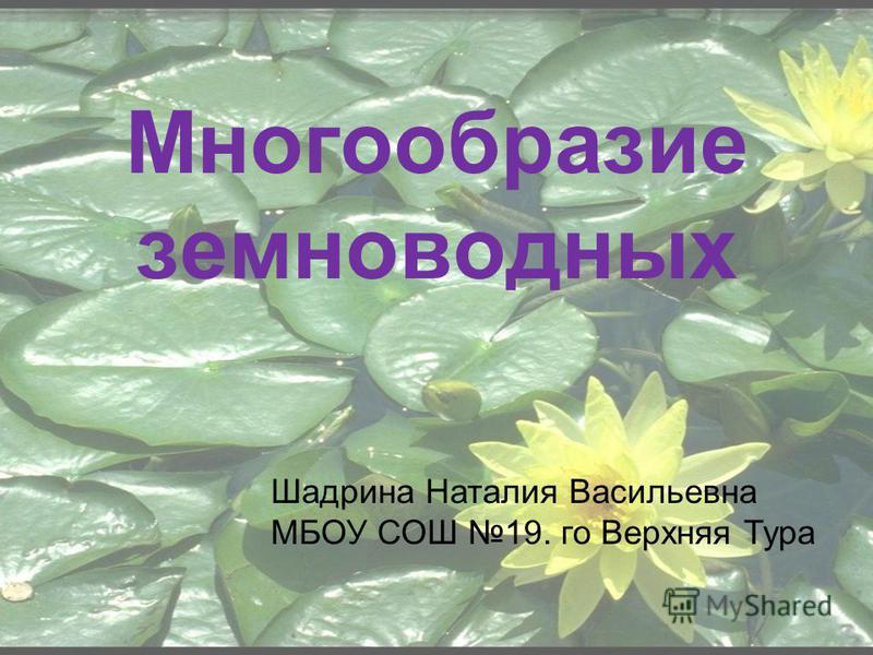 Многообразие земноводных Шадрина Наталия Васильевна МБОУ СОШ 19. го Верхняя Тура