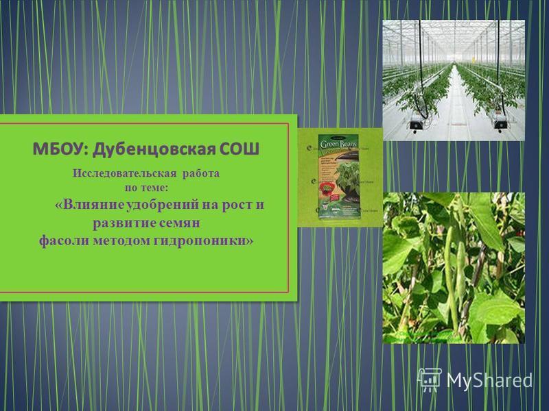 Исследовательская работа по теме: «Влияние удобрений на рост и развитие семян фасоли методом гидропоники»