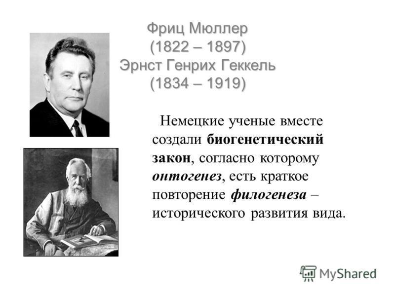 Фриц Мюллер (1822 – 1897) Эрнст Генрих Геккель (1834 – 1919) Немецкие ученые вместе создали биогенетический закон, согласно которому онтогенез, есть краткое повторение филогенеза – исторического развития вида.
