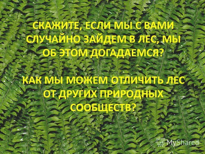 СКАЖИТЕ, ЕСЛИ МЫ С ВАМИ СЛУЧАЙНО ЗАЙДЕМ В ЛЕС, МЫ ОБ ЭТОМ ДОГАДАЕМСЯ? КАК МЫ МОЖЕМ ОТЛИЧИТЬ ЛЕС ОТ ДРУГИХ ПРИРОДНЫХ СООБЩЕСТВ?