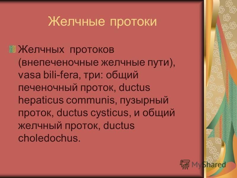 Желчные протоки Желчных протоков (внепеченочные желчные пути), vasa bili-fera, три: общий печеночный проток, ductus hepaticus communis, пузырный проток, ductus cysticus, и общий желчный проток, ductus choledochus.