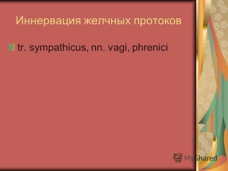 Иннервация желчных протоков tr. sympathicus, nn. vagi, phrenici