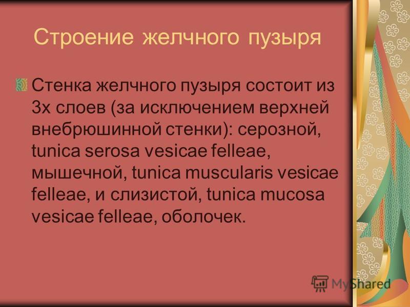 Строение желчного пузыря Стенка желчного пузыря состоит из 3 х слоев (за исключением верхней внебрюшинной стенки): серозной, tunica serosa vesicae felleae, мышечной, tunica muscularis vesicae felleae, и слизистой, tunica mucosa vesicae felleae, оболо