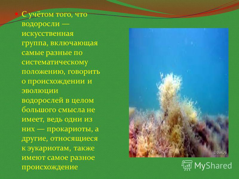 С учётом того, что водоросли искусственная группа, включающая самые разные по систематическому положению, говорить о происхождении и эволюции водорослей в целом большого смысла не имеет, ведь одни из них прокариоты, а другие, относящиеся к эукариотам