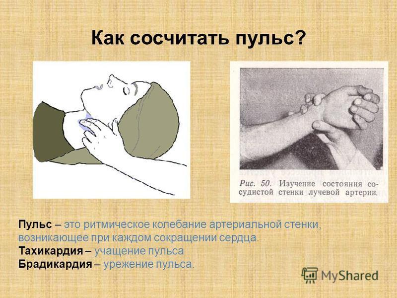 Как сосчитать пульс? Пульс – это ритмическое колебание артериальной стенки, возникающее при каждом сокращении сердца. Тахикардия – учащение пульса Брадикардия – урежение пульса.