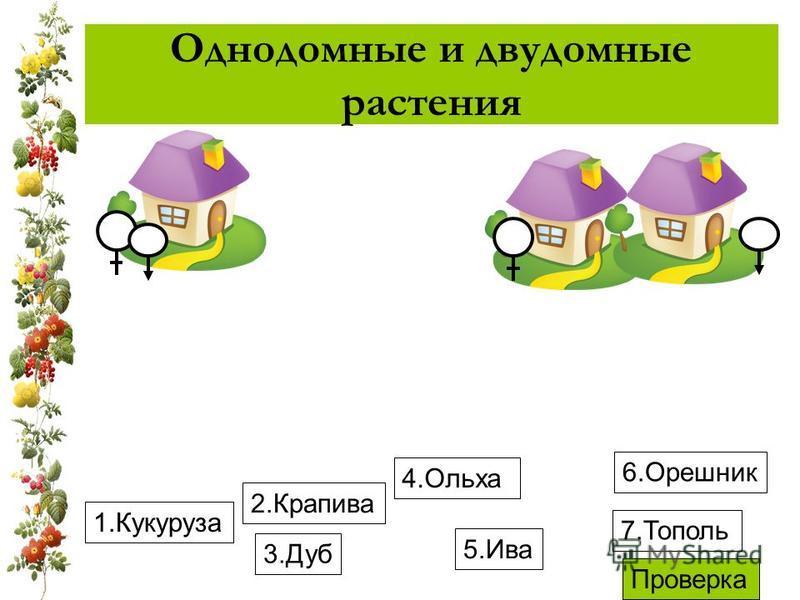 Однодомные и двудомные растения 1. Кукуруза 4. Ольха 3. Дуб 6. Орешник 2. Крапива 5. Ива 7. Тополь Проверка