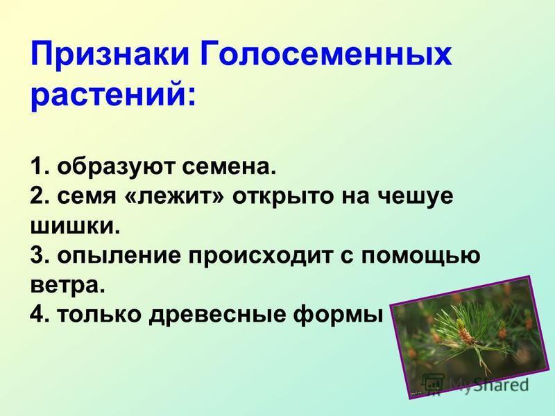 Признаки Голосеменных растений: 1. образуют семена. 2. семя «лежит» открыто на чешуе шишки. 3. опыление происходит с помощью ветра. 4. только древесные формы