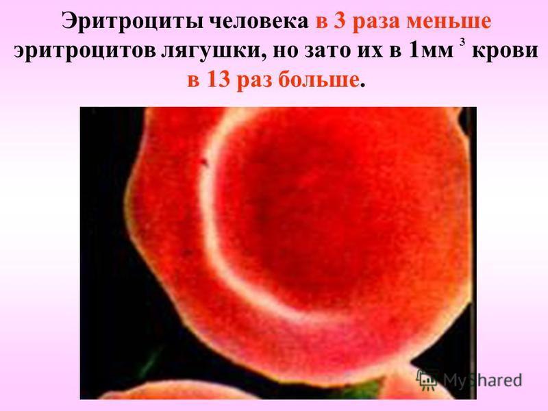 Эритроциты человека в 3 раза меньше эритроцитов лягушки, но зато их в 1 мм 3 крови в 13 раз больше.